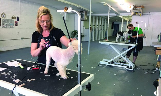 The Groomery offers calming place for pets to be pampered