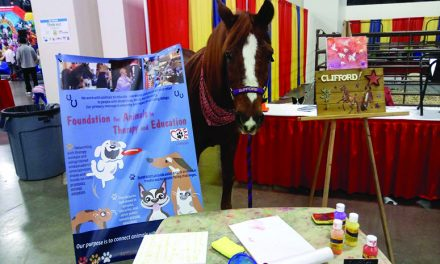 Clifford the Horse of Drummond  Island to return to Pancakes with Santa