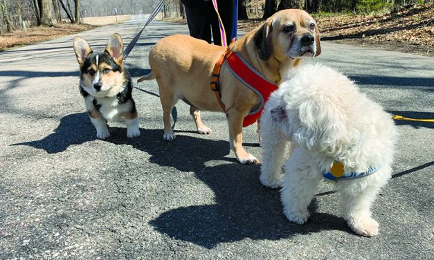 Opinion: Welcome to a dog's life