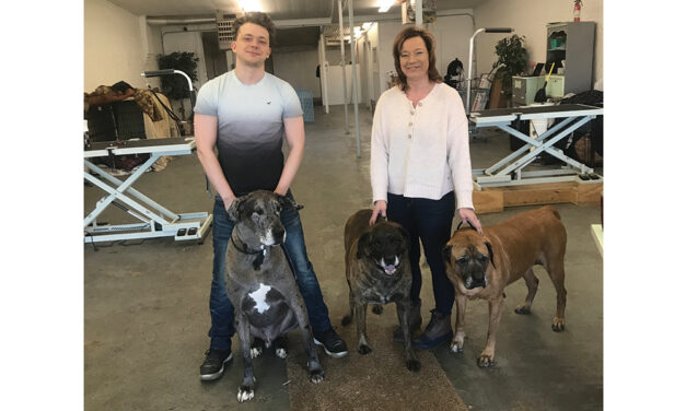 Getting to know: The Groomery