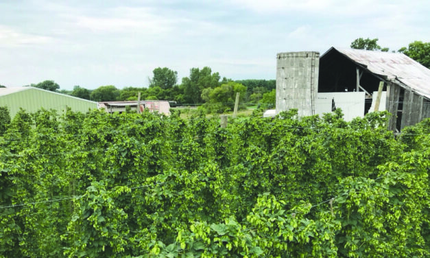 Charlotte Brewing Company using award-winning, locally grown hops for new brew