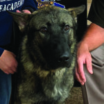 Eaton County Sheriff's Office has a new K9