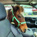 Rescued Horse No Longer Taking Back Seat