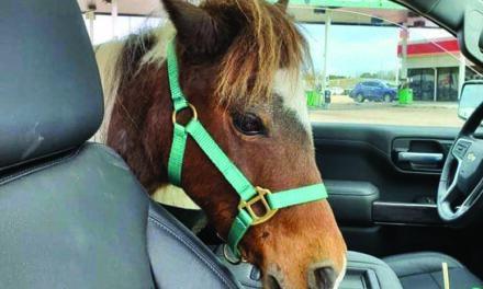 Rescued Horse No Longer Taking Back Seat