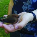 Birdie Rehab