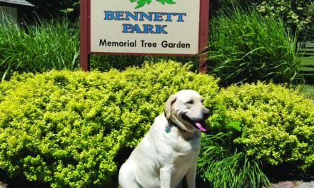 Adventurous Aggie Visits Bennett Park